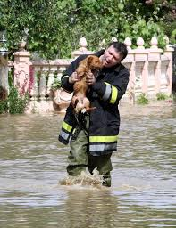Allow local authorities to aid in the rescue of displaced pets.