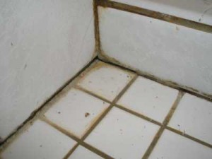 The bathroom floor is often a starting point for mold.
