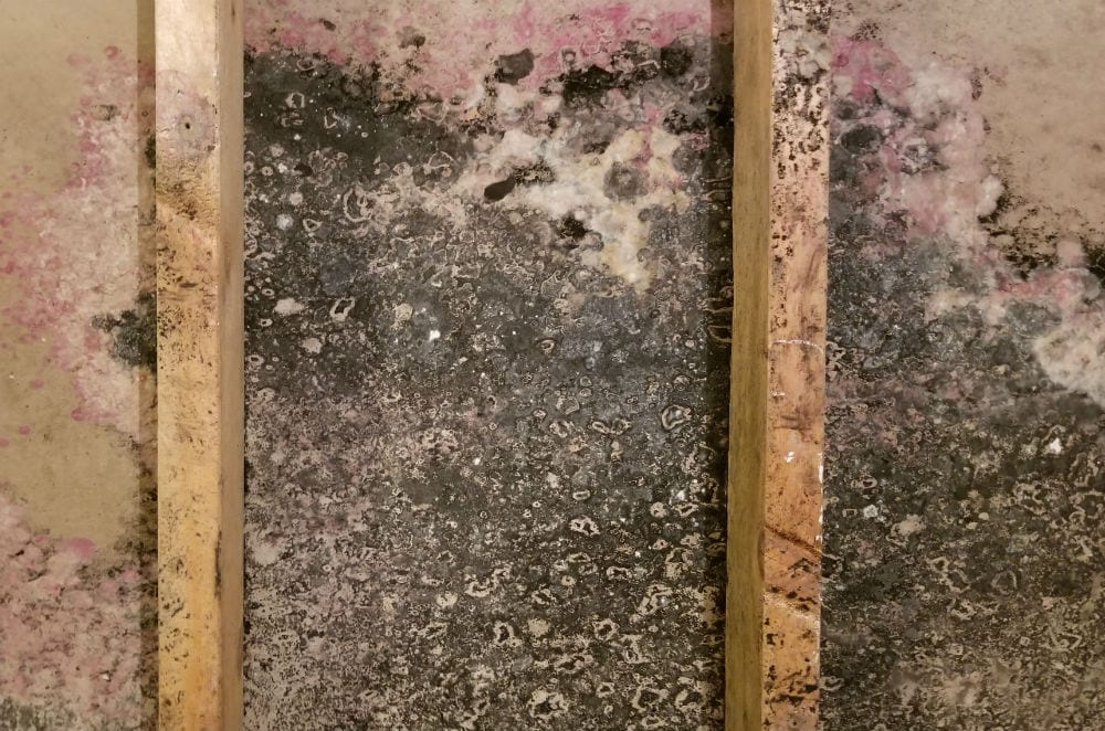 Types of Mold in Homes | What Are the Common Types of House Mold