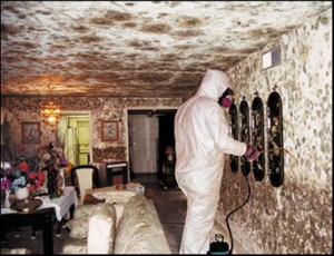 mold removal, water restoration water damage, mold remediation,