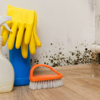 Does Bleach Kill Mold Understanding Why Bleach Isnt Effective at Removing Mold