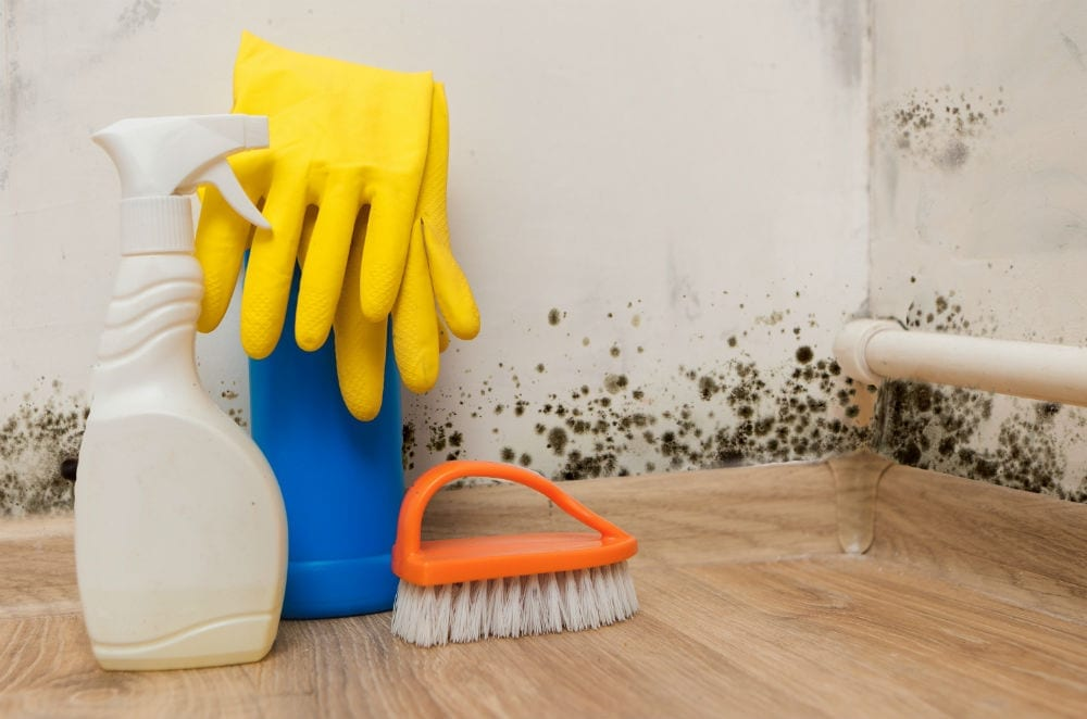 Does Bleach Kill Mold Using To Will Is Temporary At Best