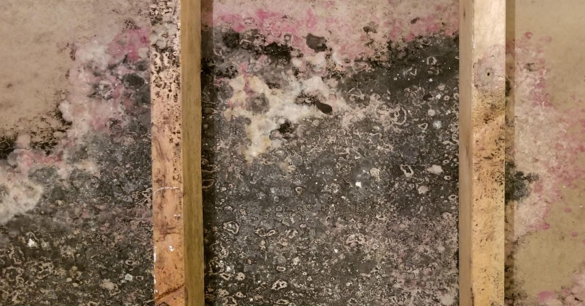 Mold Testing and Inspection | Available 24/7 | 30-Minute