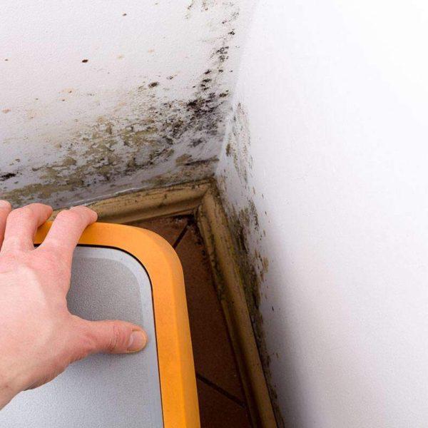 corner wall needs mold repair