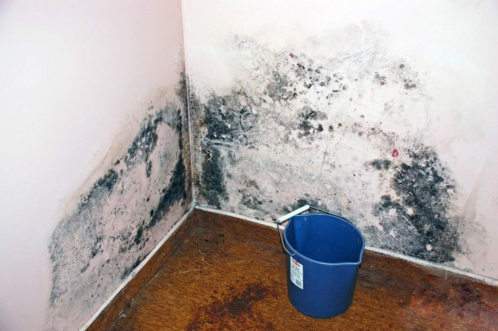 wall that needs mold removal in Algernon, NE