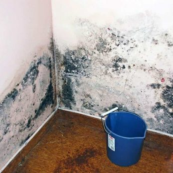 wall that needs mold removal