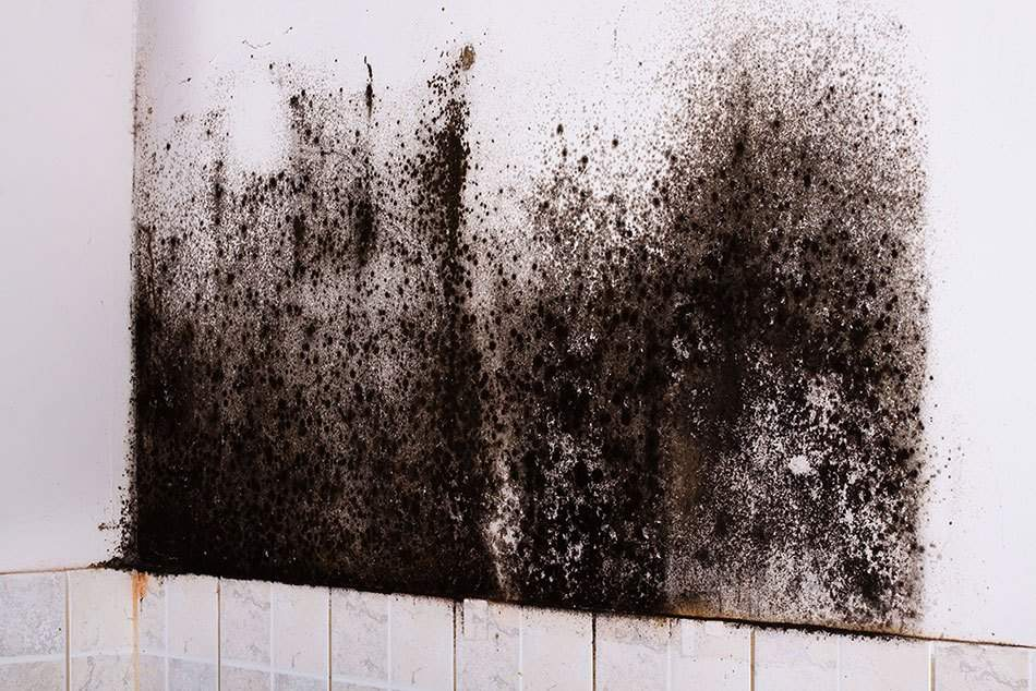wall with black mold in Fort Covington, NY