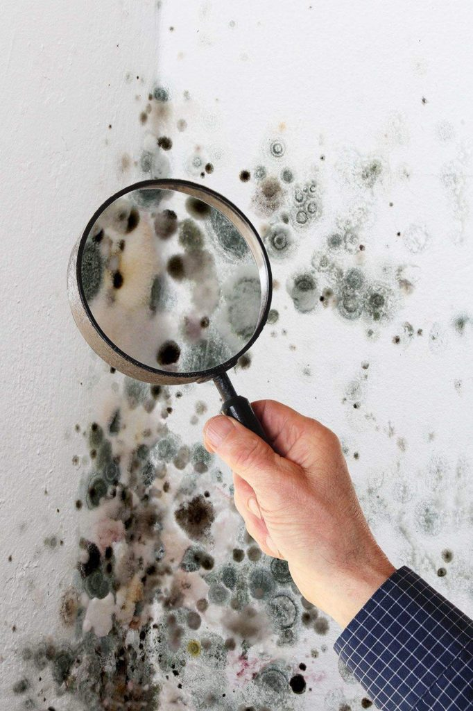 Mold inspection in Moscow, KY