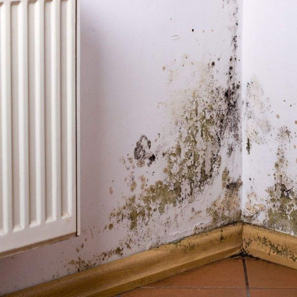 damage wall from mold