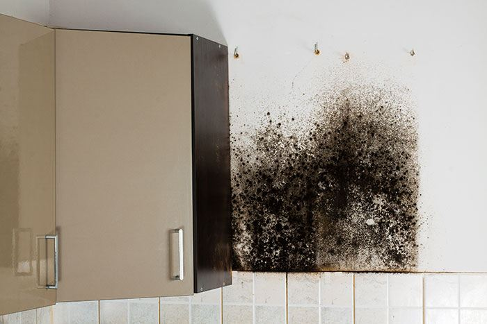 Image of kitchen with a moldy wall